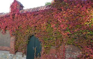 Herbstliches Laub an der Klostermauer mit Eingang