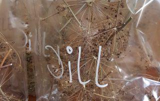 Samen von Blumen und Kräutern
